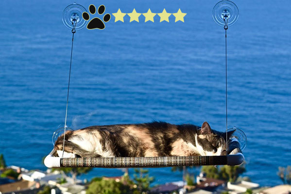 Cat Gifts for Cat Lovers No.9: cat perch for window